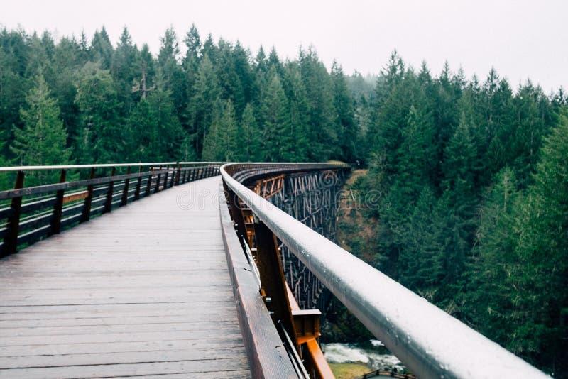 Green Pine Trees Next to a Wooden Bridge royalty free stock photo