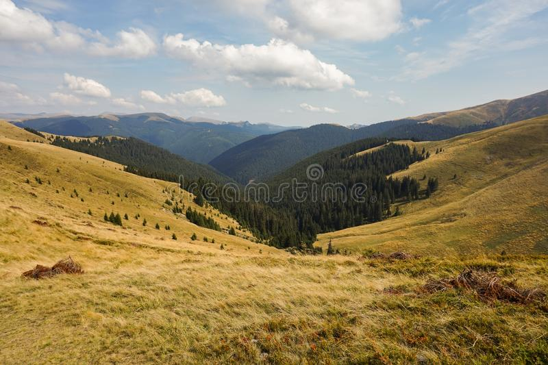 Green Pine Trees Under Blue Sky stock image