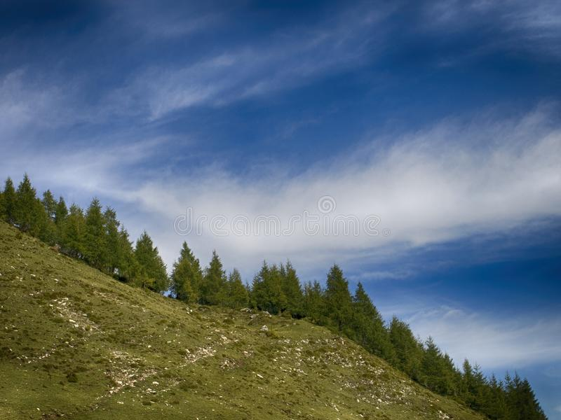 Green Pine Trees Under Clear Blue Sky royalty free stock image