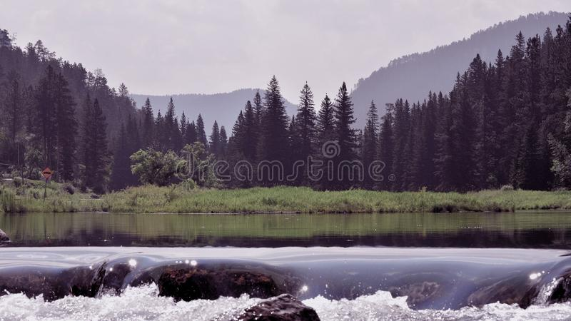 Green Pine Tress Across Body Of Water During Daytime Free Public Domain Cc0 Image