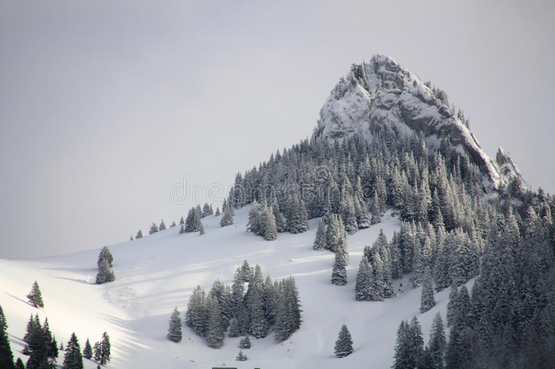 Green Pinetrees On A Snow Mountain Free Public Domain Cc0 Image