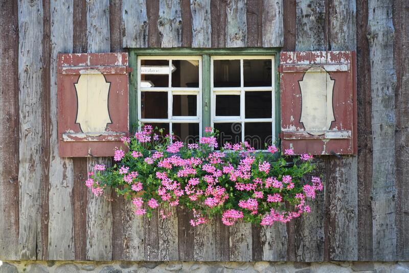 Green and Pink Flower on Green and White Wooden Framed Window royalty free stock photos