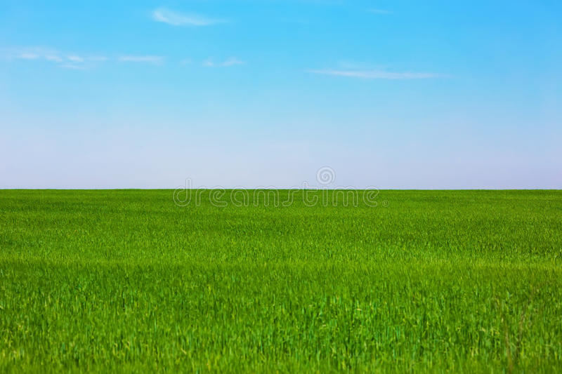 Green plain field. And blue clear sky stock photo