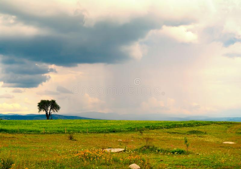 Green plain tree and sky view in turkey royalty free stock photos