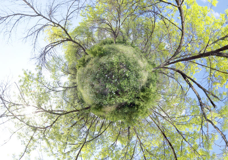 Trees growing from green planet stock photo