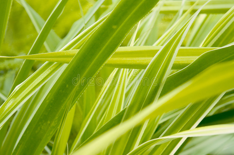 Download Green plant stock photo. Image of blured, blur, earth - 1398780