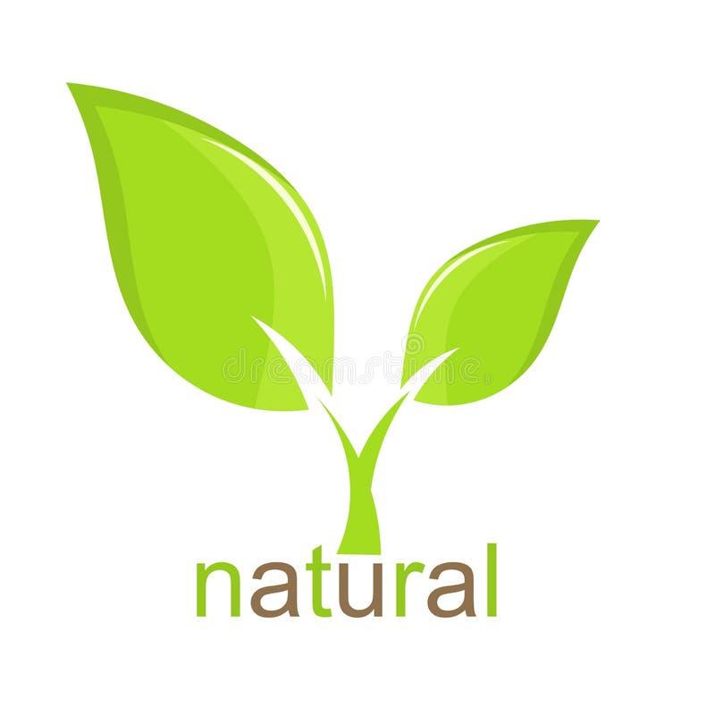 Green Plant royalty free illustration