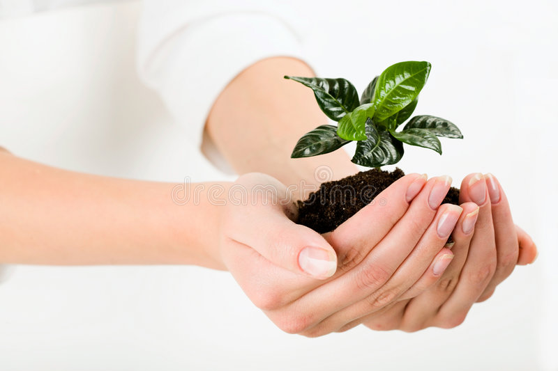 Green plant. Growing green plant in the female hand stock photography