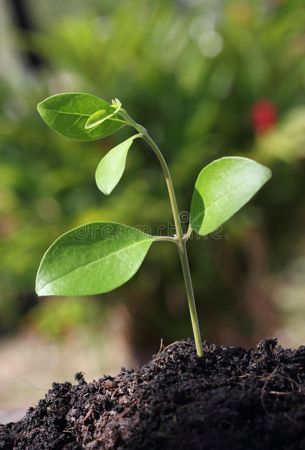 Download Green plant stock image. Image of agriculture, tree, seed - 37870745