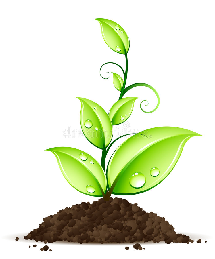 Free Green Plant Stock Photos - 8035363