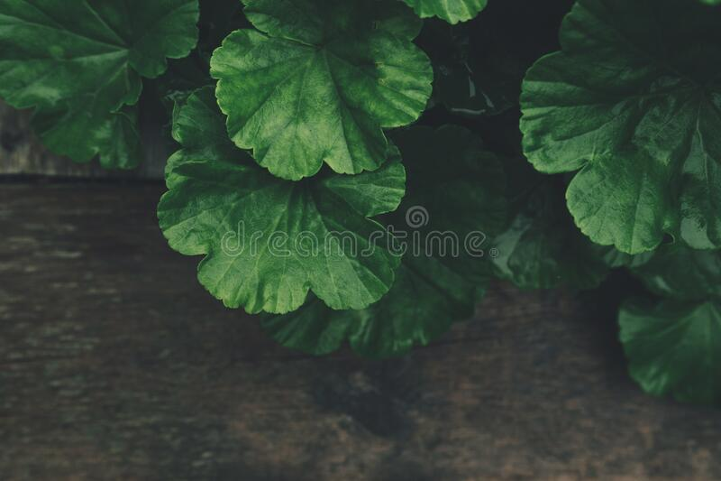 Green Plant Free Public Domain Cc0 Image