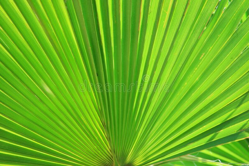 Green Plant stock photos
