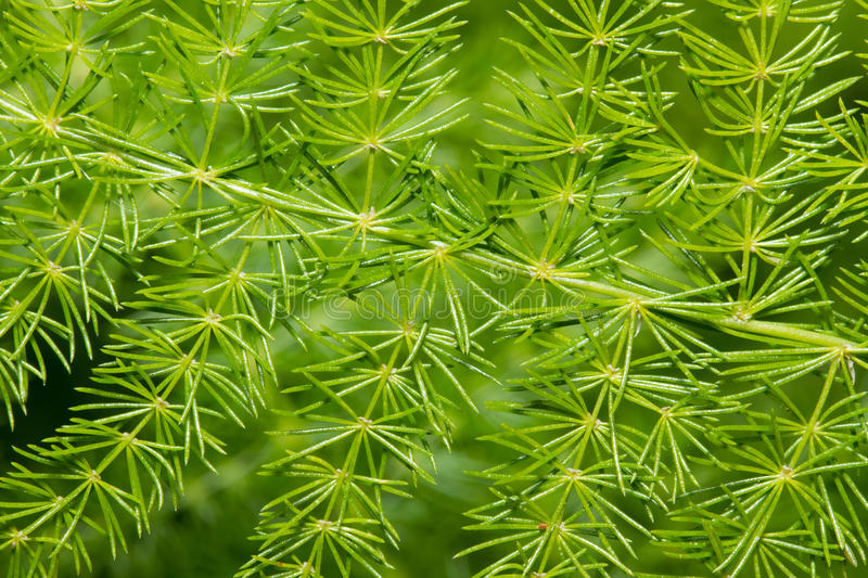 Green plant background stock image