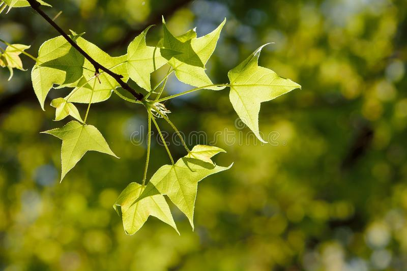 Green plant Texture royalty free stock photography