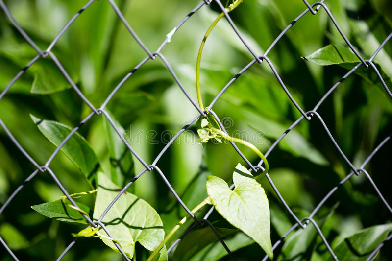 Green plant behind a metal grid of a fence royalty free stock images