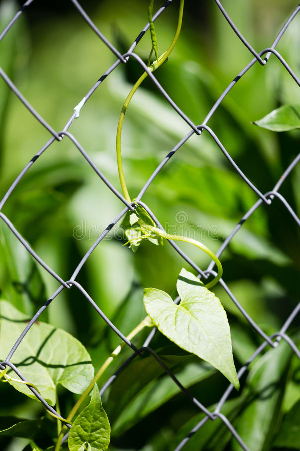 Green plant behind a metal grid of a fence stock photography