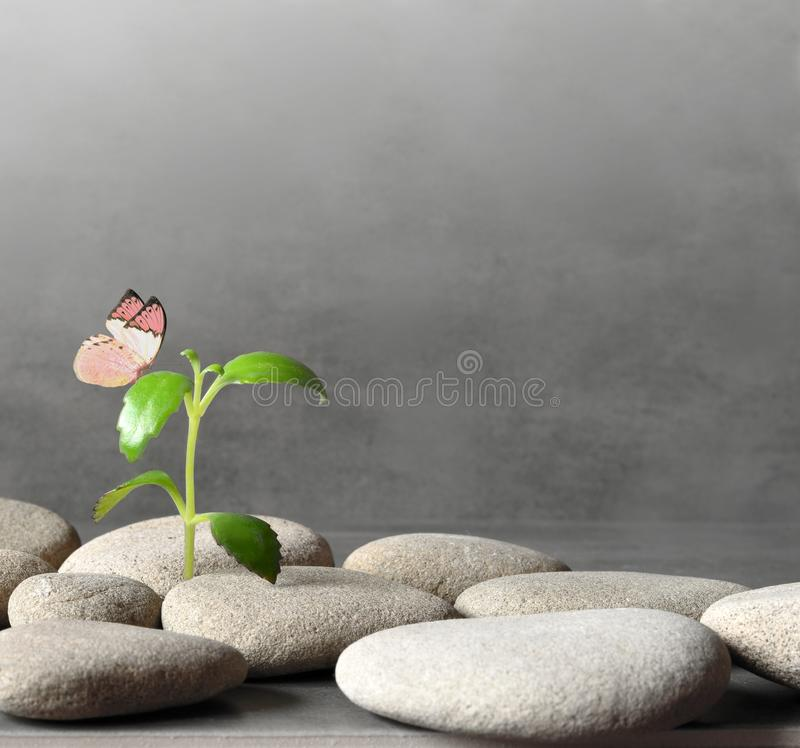 Free Green Plant Between The Pebbles On A Gray Background And Butterfly Royalty Free Stock Photos - 103155678