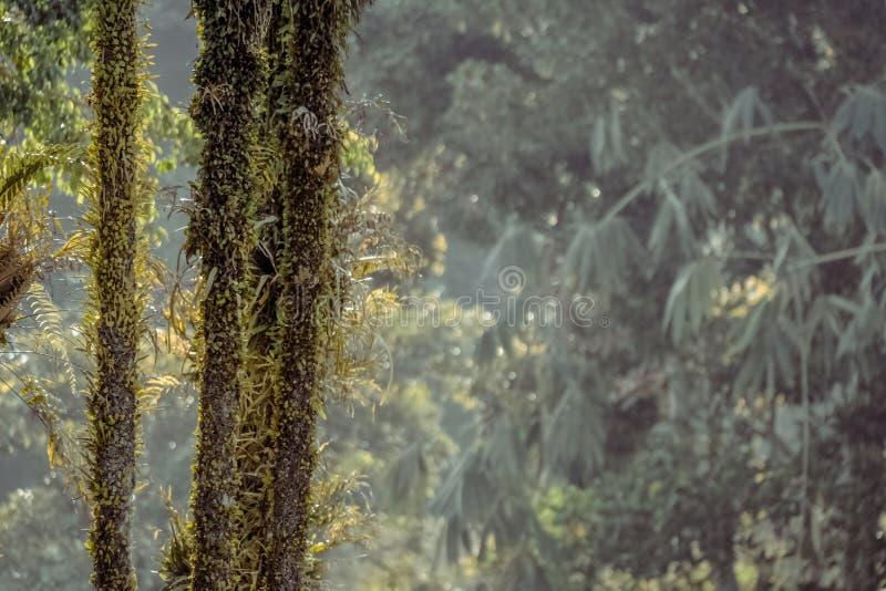 Green Plant On Black Wood During Daytime Free Public Domain Cc0 Image