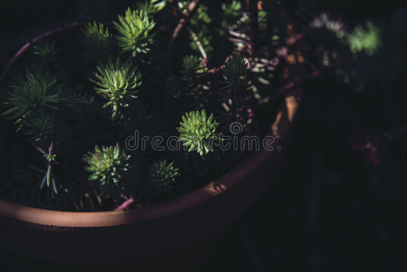 Green Plant On Brown Claypot Free Public Domain Cc0 Image