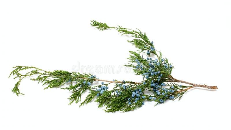 Green Plant Brunch Stock Image