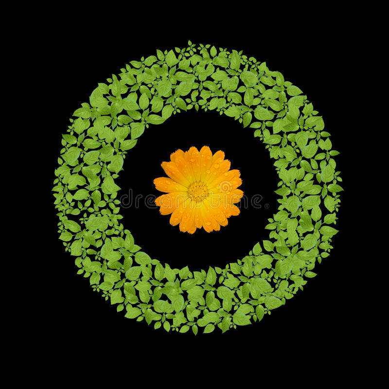 Green plant circle with flower royalty free stock photo