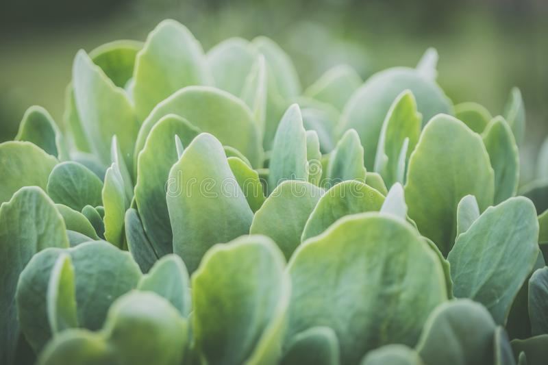 Green Plant Close-up Photo stock photography