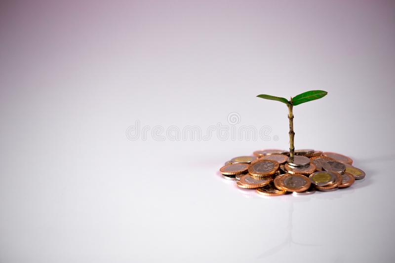 Green plant on coins showing financial growth. On white background stock photography