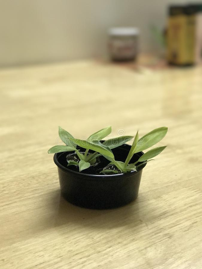 Green plant on computer table royalty free stock photo