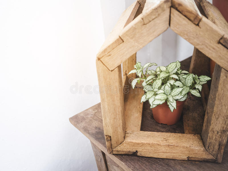 Green Plant Craft Wooden House Garden decoration Hipster style O. Utdoor royalty free stock photography