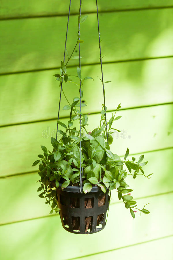 Free Green Plant Decoration Stock Images - 19044824