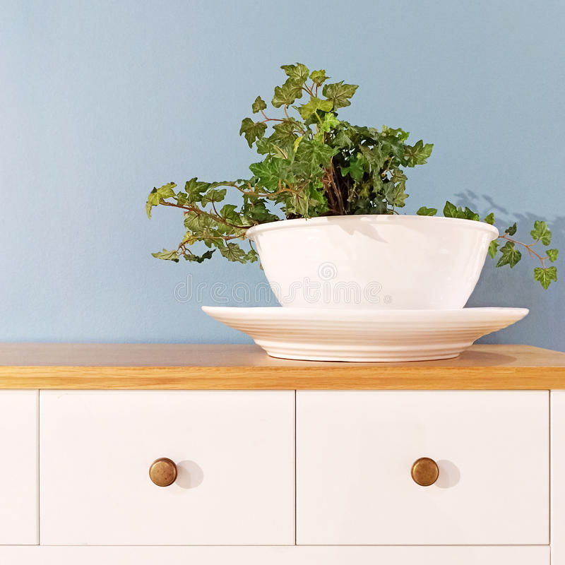 Green plant in a decorative white pot stock photography