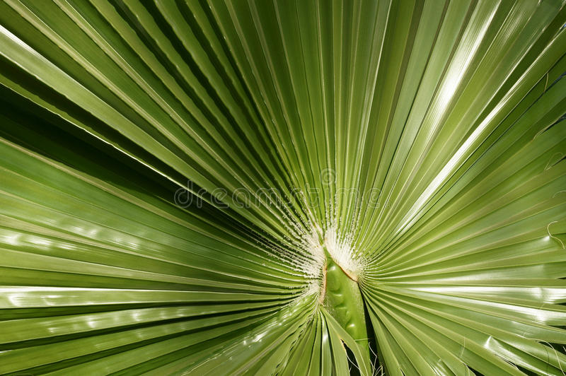 Green plant in Egypt royalty free stock photography
