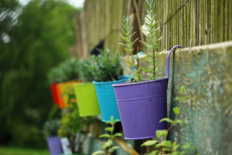 Green, Plant, Flora, Garden royalty free stock photos