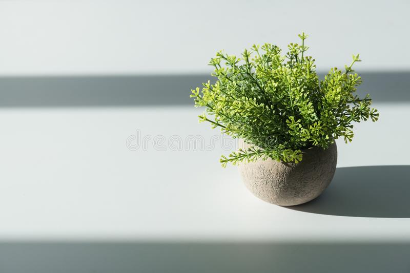Green plant in flower pot with sunlight shadow on white table wi stock images