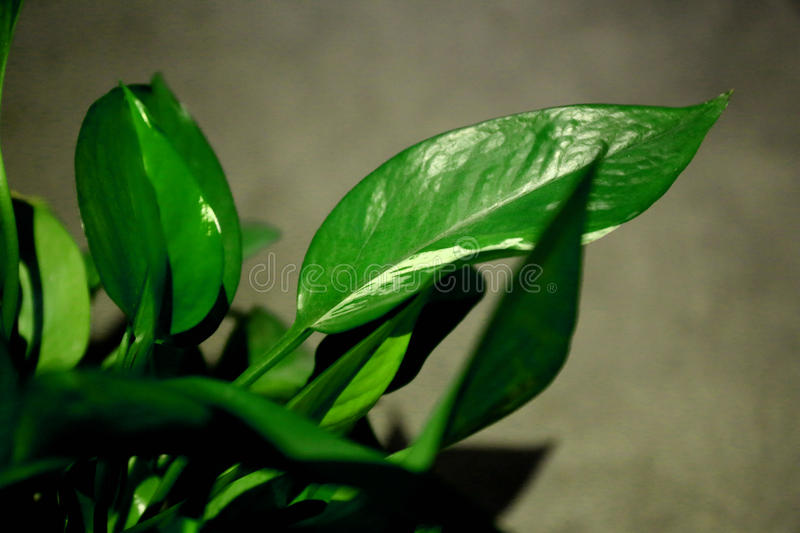 Green plant 5 royalty free stock photography