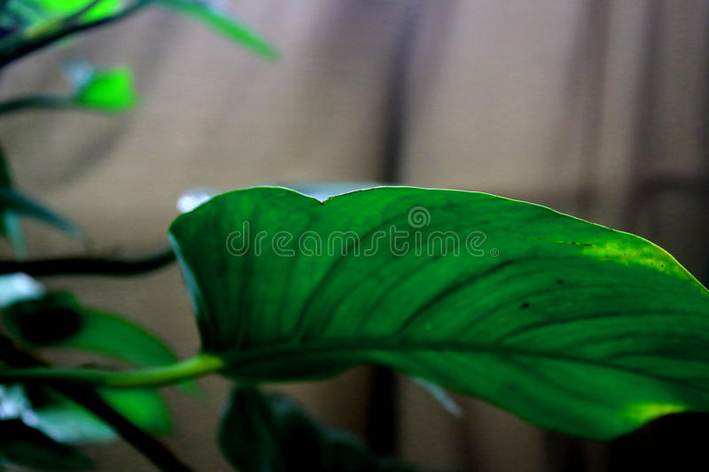 Green plant 4 stock image