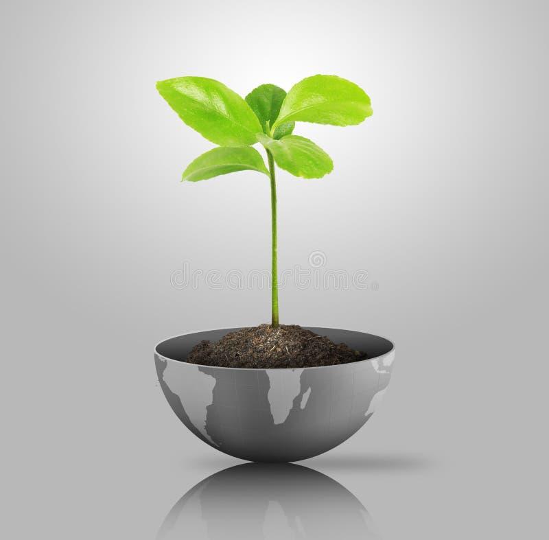 Download Green plant on globe stock illustration. Image of leaf - 23509534