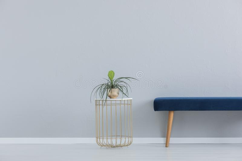 Green plant in golden pot and blue velvet settee, real photo with copy space. Green plant in golden pot on the stylish table next to blue velvet settee, real stock images