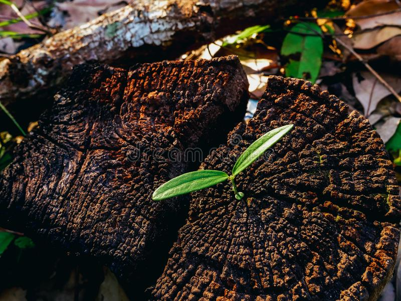 Green plant growing on dead tree trunk, green plant on stump. Hope concept royalty free stock image