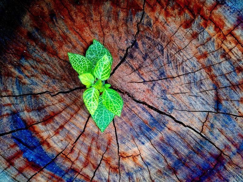 Green plant growing on dead tree trunk, green plant on stump. Hope concept stock photos