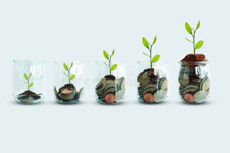 Green plant growing out of jar with money coins suggesting business or economy growth royalty free stock photos