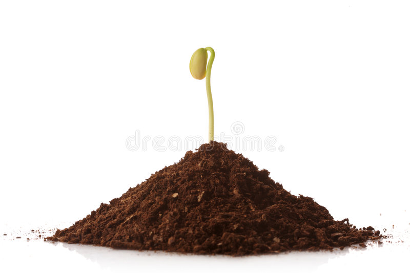 Green plant growing from a pile of soil stock photos