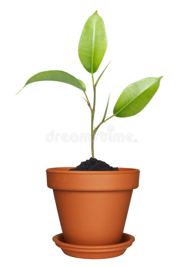 Green plant growing in pot stock image