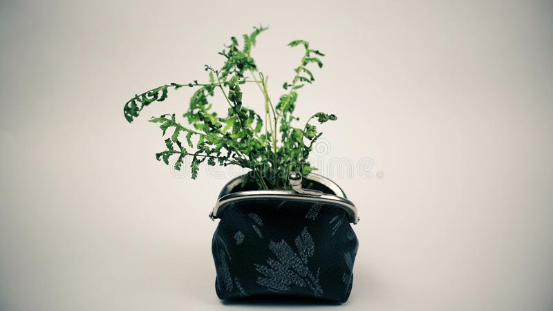 Green plant growing from purse, growing money concept. Video vector illustration