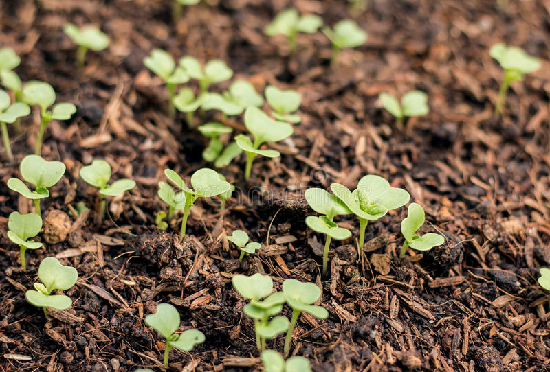 Green Plant Growing On Soil natural. Green Plant Growing On Soil stock photo