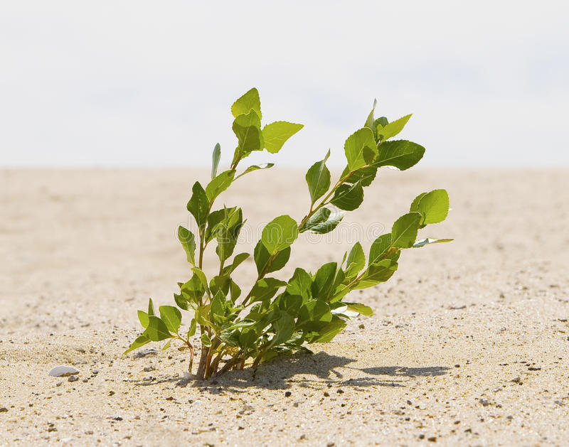Download Green Plant Growing Trough Sand Stock Image - Image of change, environment: 17143277