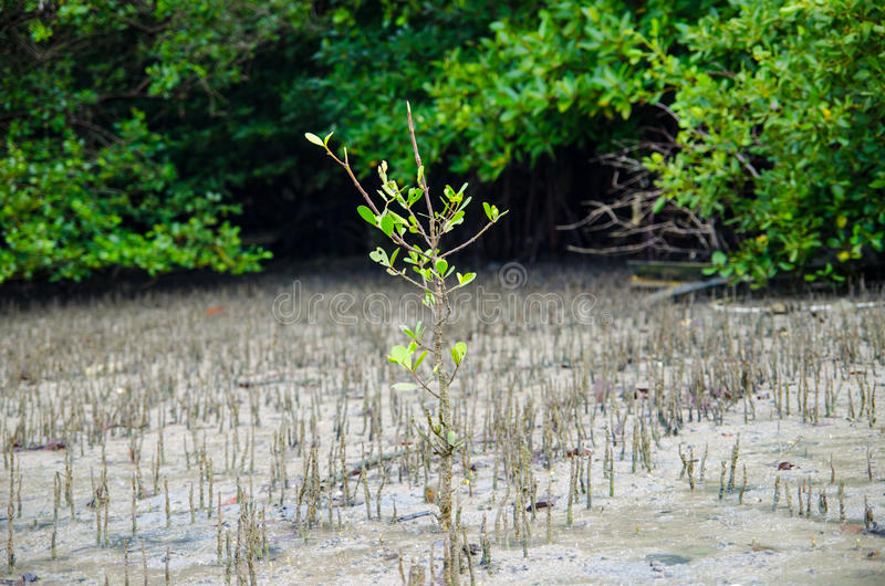 Download Green Plant Growing Trough Sand Stock Photo - Image: 30257894
