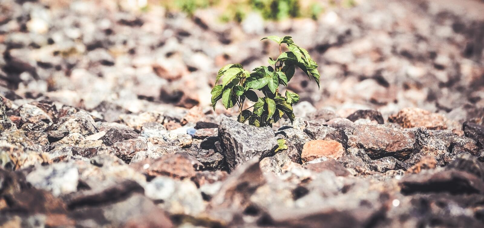 Green plant grows from under the stones. Close-up, macro. Copy space. Concept life royalty free stock images