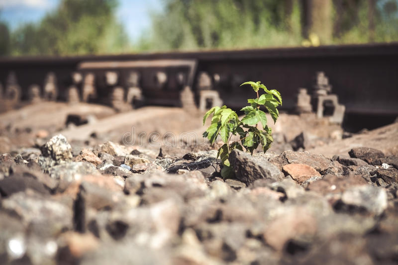 Green plant grows from under the stones Near railway tracks. Close-up, macro. Copy space. Concept life stock images
