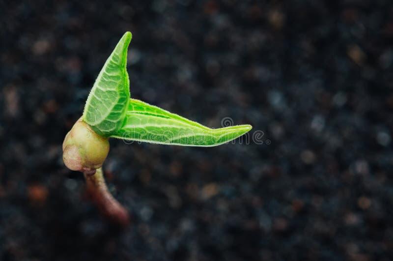 Green plant growth on soil spring season royalty free stock image